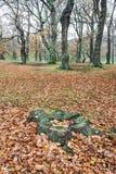 Пуща в осени Стоковые Фото