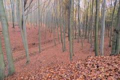 Пуща в осени стоковое фото rf