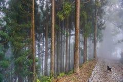Пуща в тумане Сикким, Индия стоковые изображения rf