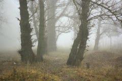 Пуща в тумане стоковые фотографии rf