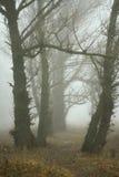 Пуща в тумане стоковое фото