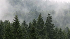Пуща в тумане акции видеоматериалы