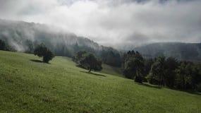 Пуща в тумане Стоковые Фото