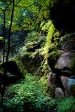 Пуща в Saxon Швейцарии Стоковые Изображения