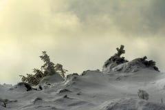 Пуща дерева сосенки во время зимы Стоковая Фотография RF