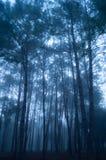 Пуща дерева сосенки Стоковое Изображение RF