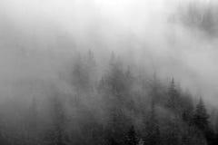 пуща загадочная Стоковая Фотография RF