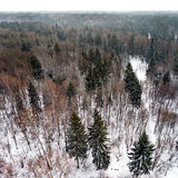 Пуща зимы. Взгляд от выше. Панорама. стоковое изображение rf