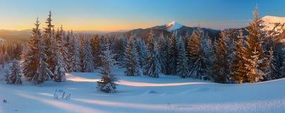 Пуща зимы в горах Стоковая Фотография RF