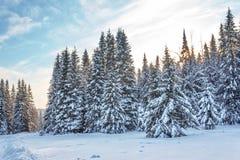 Пуща зимы в солнечном дне Стоковое фото RF