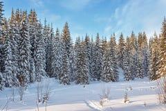 Пуща зимы в солнечном дне Стоковое Изображение RF