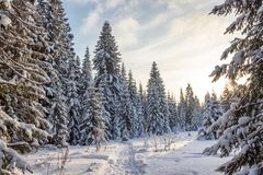 Пуща зимы в солнечном дне Стоковая Фотография