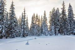 Пуща зимы в солнечном дне Стоковая Фотография RF