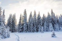 Пуща зимы в солнечном дне Стоковые Изображения