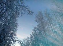 Пуща зимы снежная Стоковые Изображения