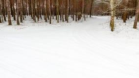 Пуща зимы снежная Стоковые Фото