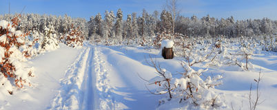Пуща зимы Стоковая Фотография RF