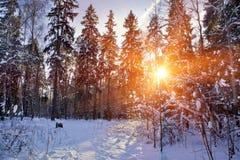 Пуща зимы стоковое изображение rf