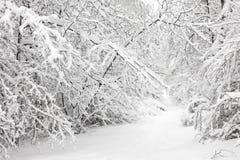 Пуща зимы Стоковое Изображение