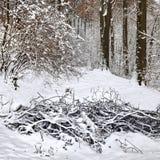 Пуща зимы. стоковые изображения rf