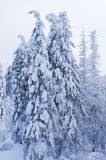 Пуща зимы Стоковые Фото