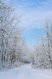 Пуща зимы стоковое фото rf