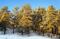 Пуща зимы Стоковые Фотографии RF