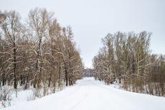 Пуща зимы стоковые изображения rf