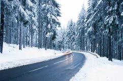 Пуща зимы Стоковая Фотография