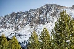 Пуща и горы Стоковая Фотография