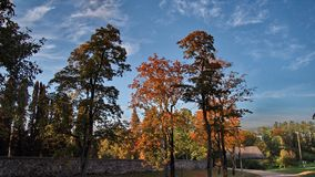 Пуща и небо осени Стоковое Изображение RF