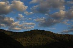 Пуща и небо Стоковое Изображение RF