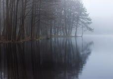 Пуща и озеро Стоковые Фото