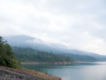 Пуща и озеро Стоковое Изображение