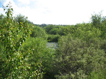 Пуща и река Стоковые Изображения