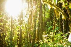 Пуща и солнце Стоковая Фотография RF