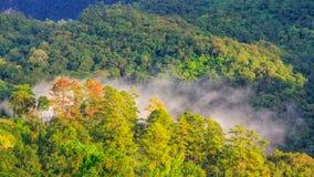 Пуща и туман осени Стоковое Изображение RF