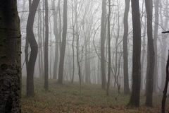 Пуща и туман Стоковое фото RF