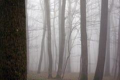 Пуща и туман стоковая фотография