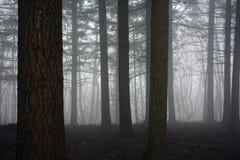 Пуща и туман Стоковая Фотография RF