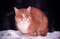 пуща кота Стоковые Фотографии RF