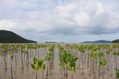 Пуща мангровы Стоковая Фотография