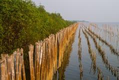 Пуща мангровы Стоковое Изображение RF