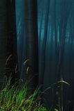 пуща мистическая Стоковая Фотография