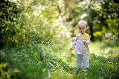 пуща младенца меньшее лето Стоковое Фото