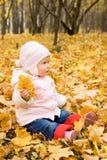 пуща младенца осени стоковые фото