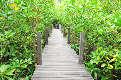 пуща моста идет мангрова к деревянному Стоковое фото RF