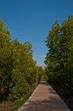 пуща моста идет мангрова к Стоковое фото RF