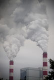 пуща над дымом Стоковое Фото
