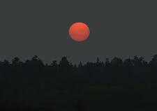 пуща над заходом солнца Стоковое Фото